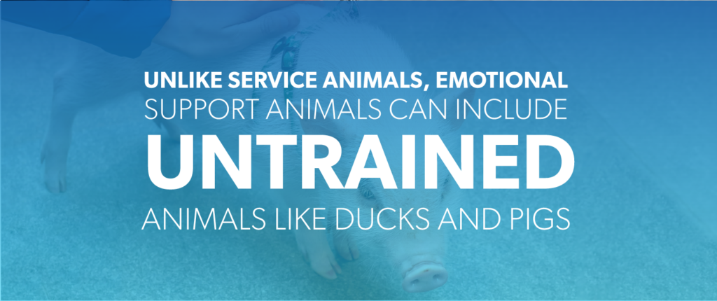 Unlike service animals, emotional support animals can include untrained animals like ducks and pigs.